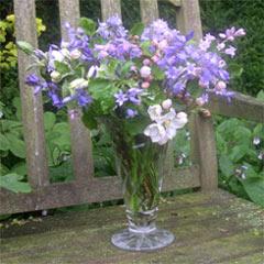 April flowers 2008.