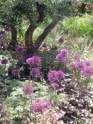 Chelsea Flower show. Scent of a Roman Garden
