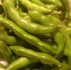 broad beans somrtimes called fava beans