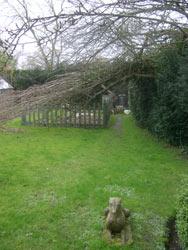 broken poplar