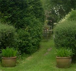 garden June 2008