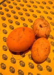muddy eggs