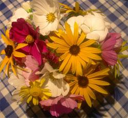 September 2008 flowers