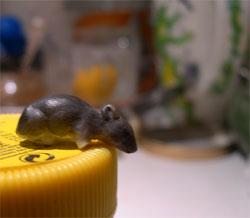 tiny rat