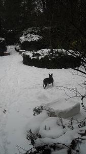 Inca in the snow again!