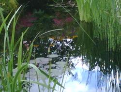 Photo: A  pond