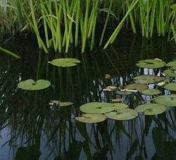 Photo: Pond