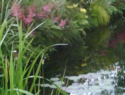 Photo: Garden pond
