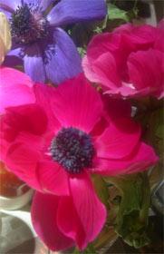 Photo: Anemones