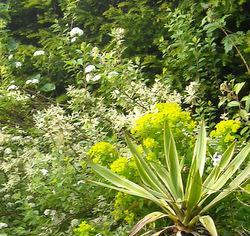 Detail from pondside garden