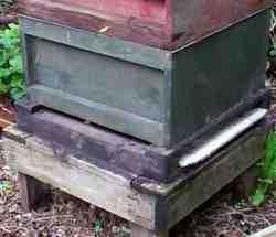 beehive_with_buckfast_bees