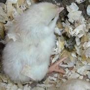 New chick!