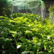 Biodynamic gardening update. One year on.