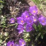 Garden update: March 2009