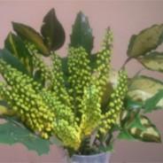 Flowers from the garden: November 2008