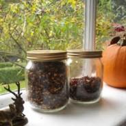 Make your own rosehip tea
