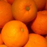 Gilbert's Seville orange gin recipe