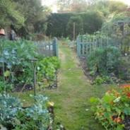 Growing vegetables all year round: October 2009 kitchen garden update