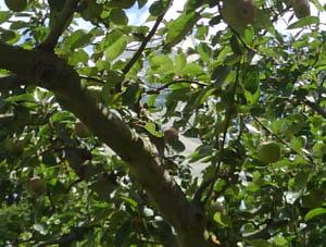 Photo: Tree
